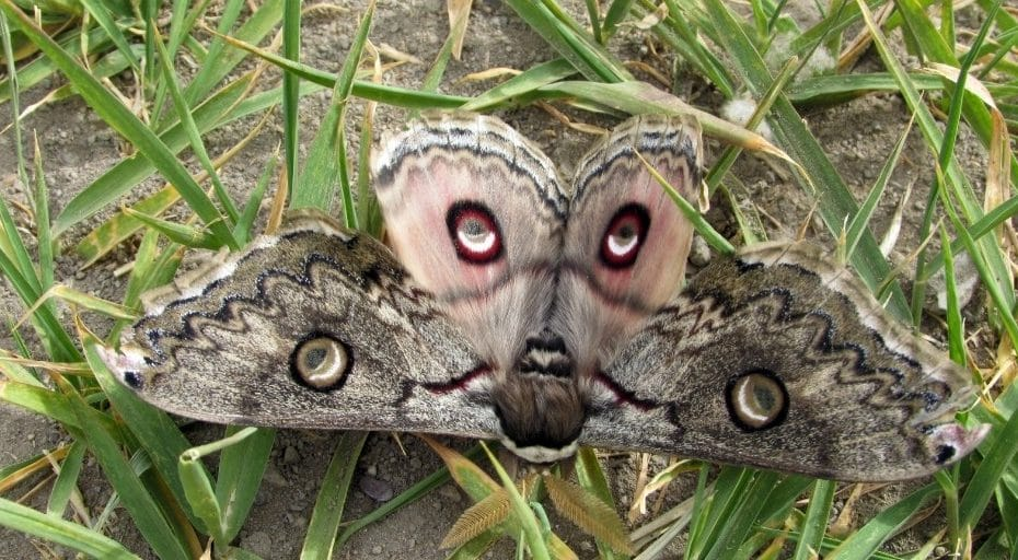 Are Moths Blind Or Can They See