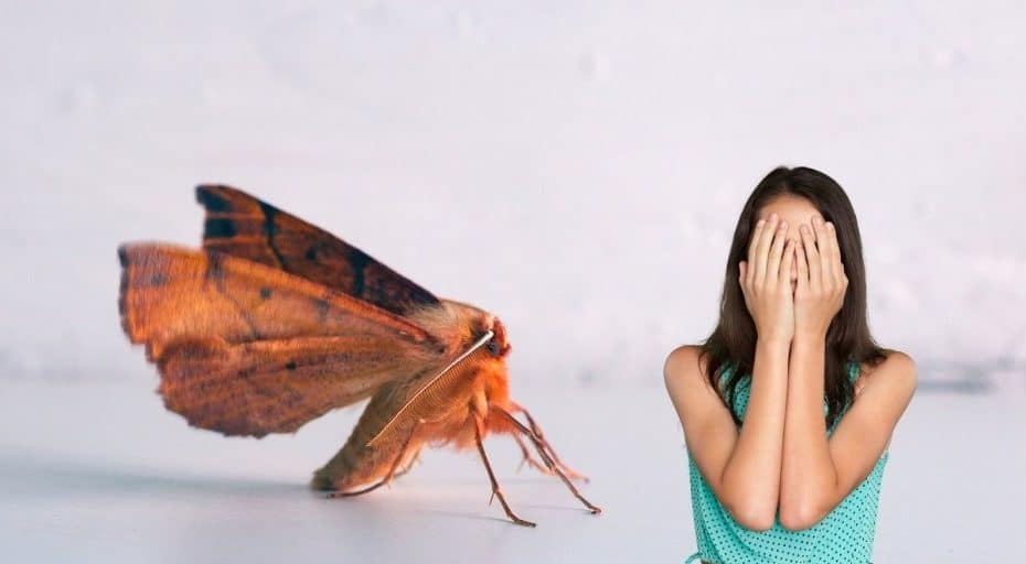 Can Moths Hurt You In Your Sleep