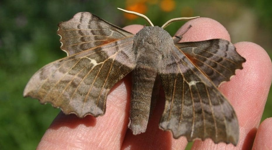 Are Moths Made Of Dust