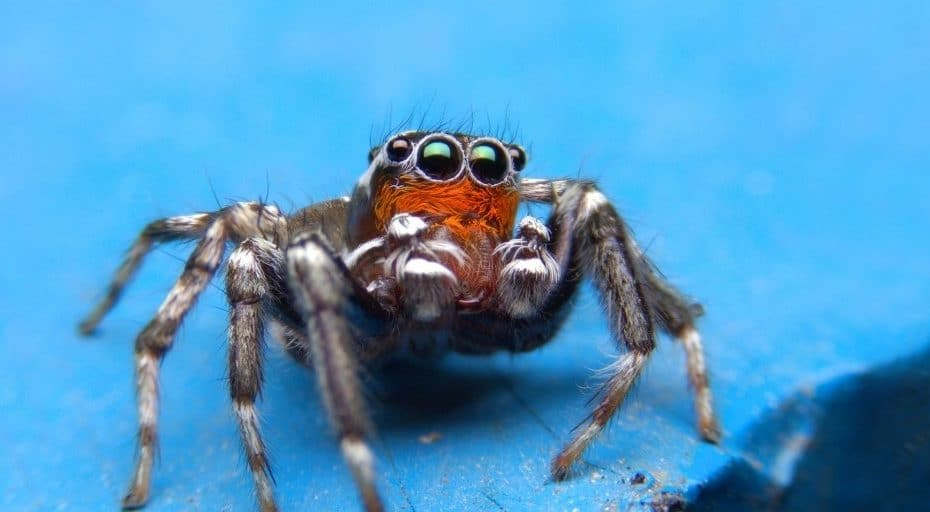 The Cutest Spiders In The World