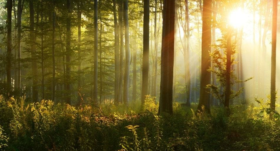Which Trees Produce The Most Oxygen