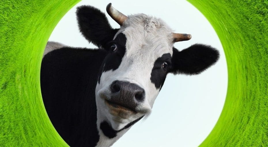 Are Cows Man-Made