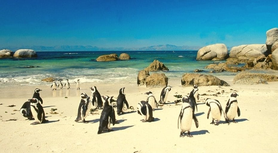Can Penguins Live In Warm Weather