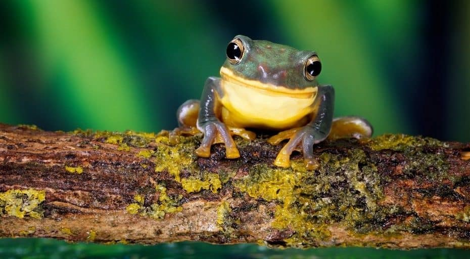 Do Frogs Have Noses
