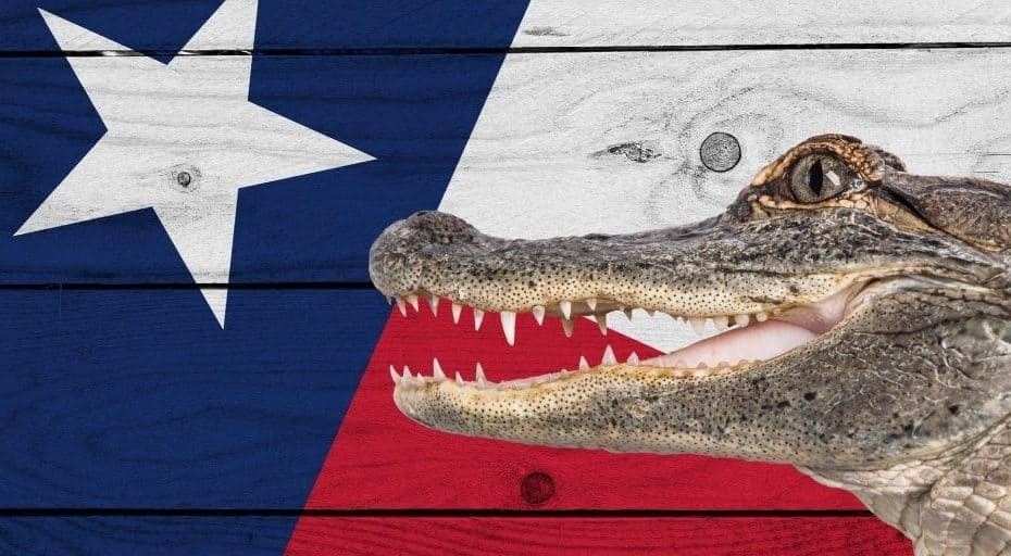 Are There Alligators in Texas?