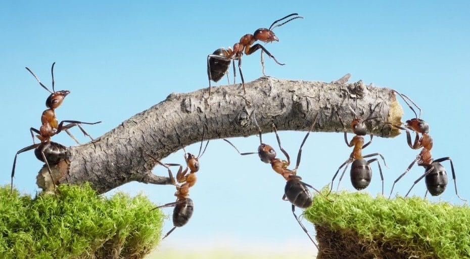 Do ants have brains