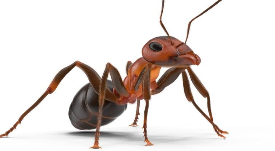 Do ants have lungs