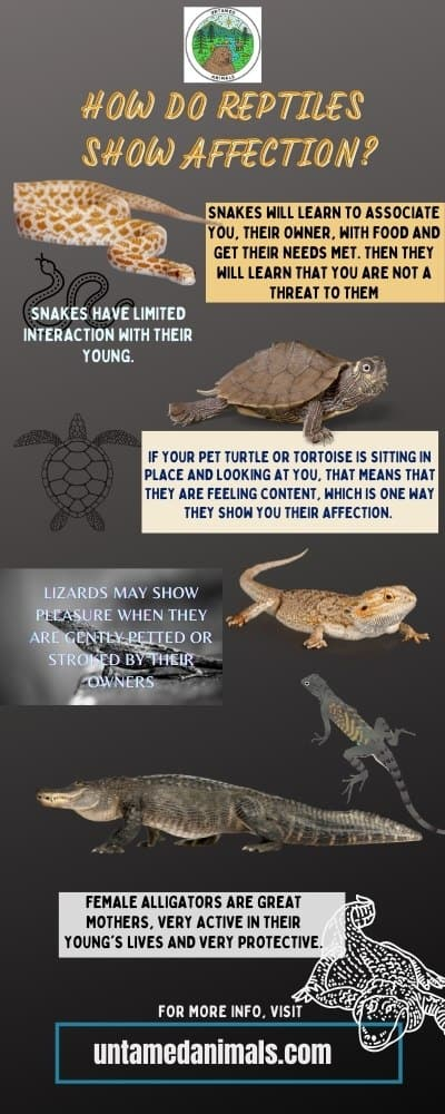 How Do Reptiles Show Affection? Infographic