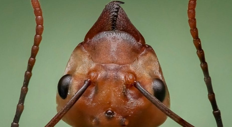 Why Are Ants Spicy?