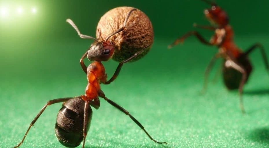 Are Ants Nocturnal