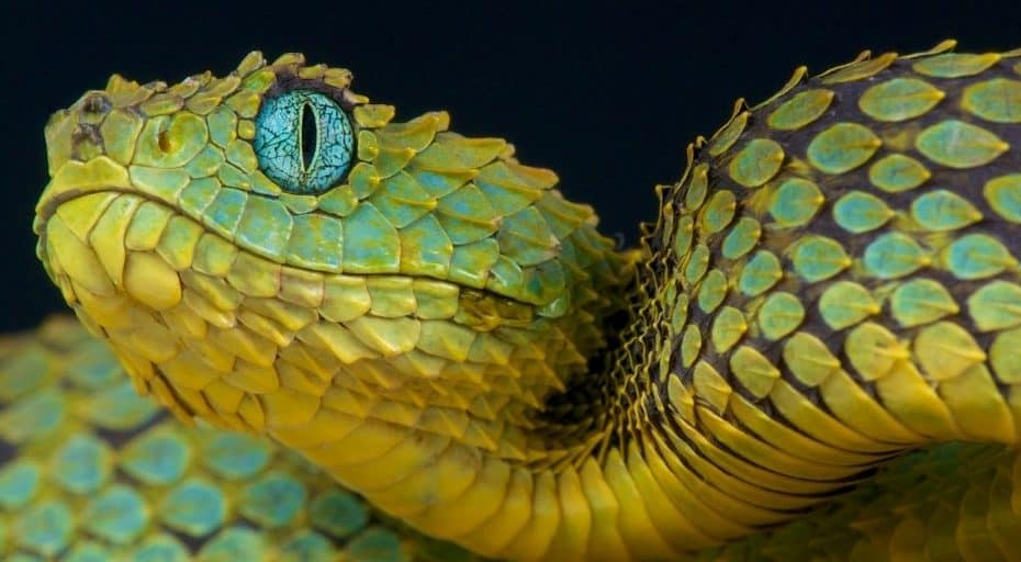 Are Snakes Blind?