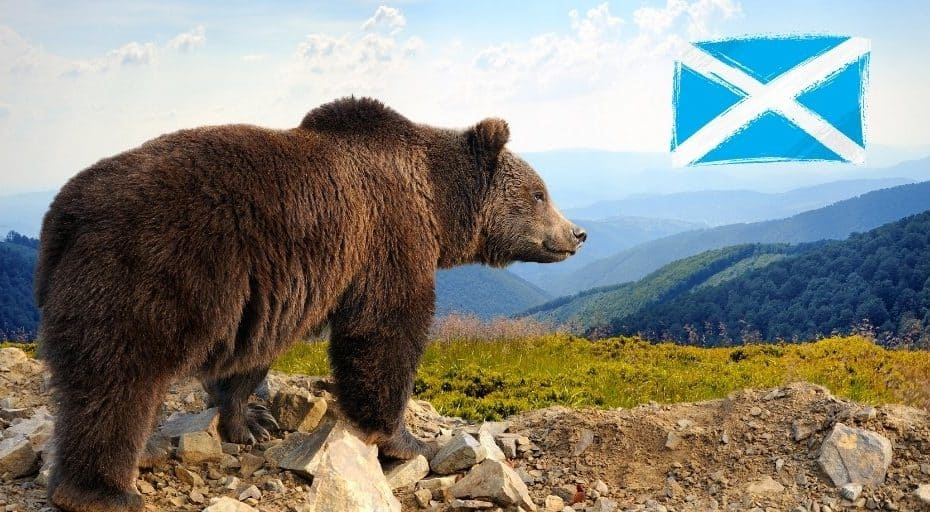 Are There Bears In Scotland?
