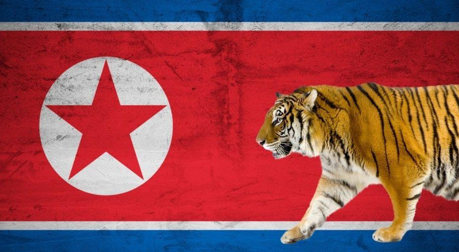 Are There Tigers In North Korea?