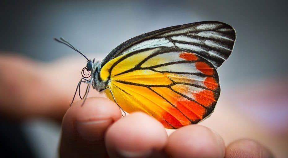 Can Butterflies See Their Wings?