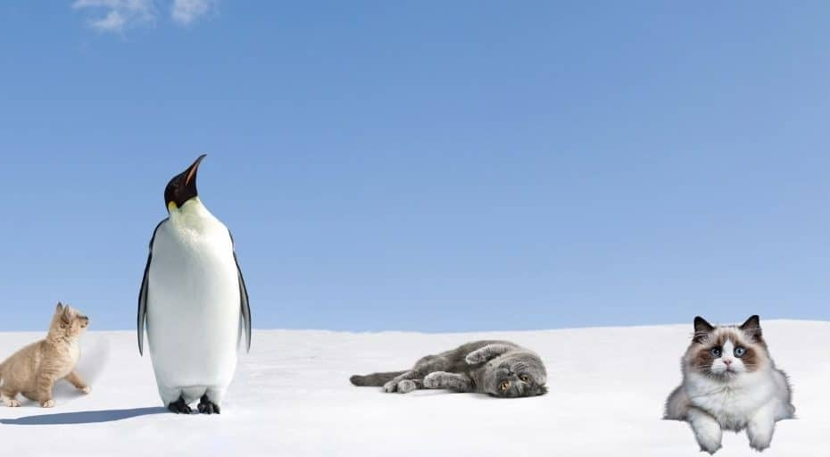 Are There Cats In Antarctica?