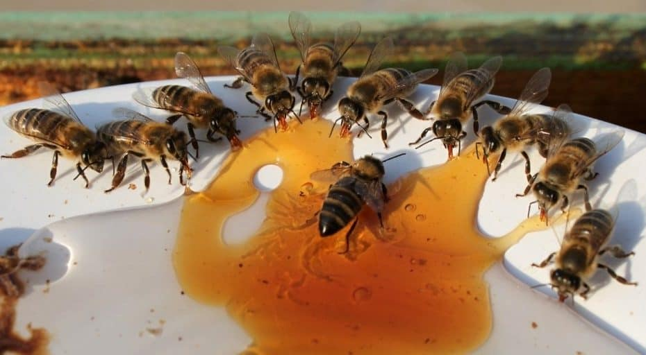 Do People Eat Bees?