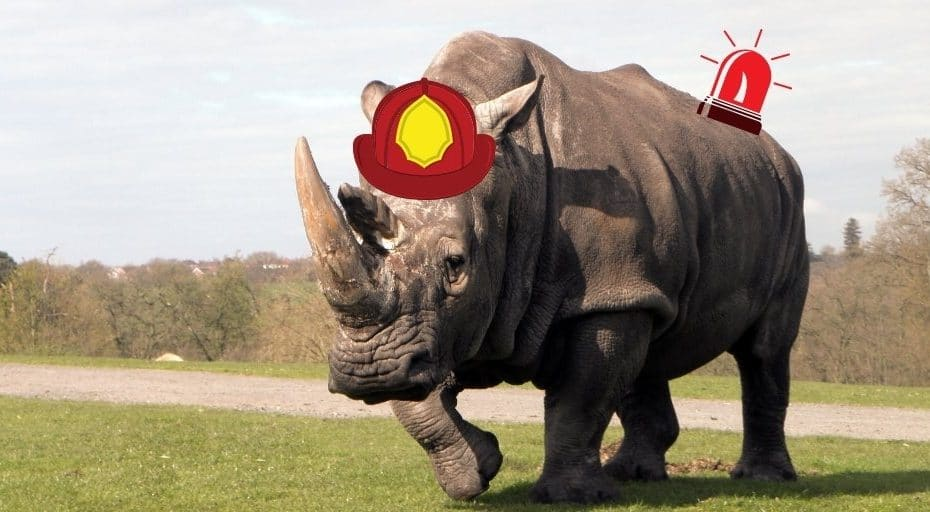 Do Rhinos Put Out Fires?