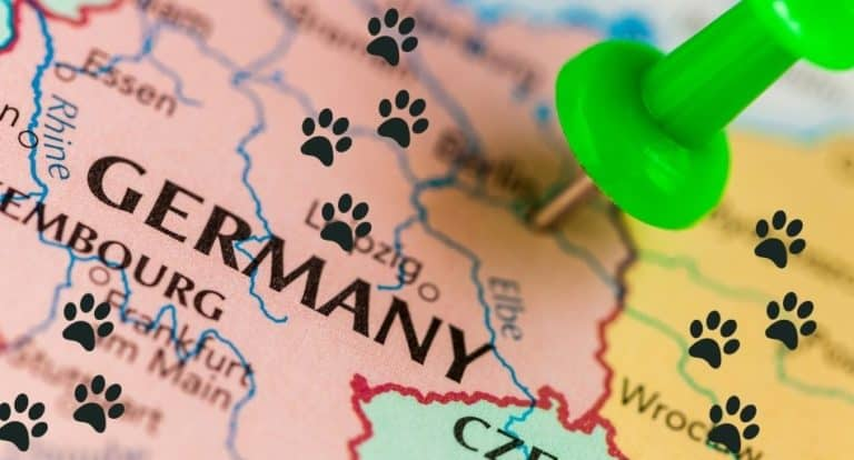 What Is The National Animal Of Germany?