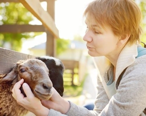 Why are certain animals drawn to certain people?