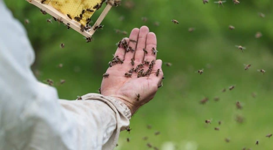 beekeeper saved a swarm of bees with her bare hands