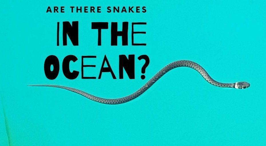 Are There Snakes In The Ocean?