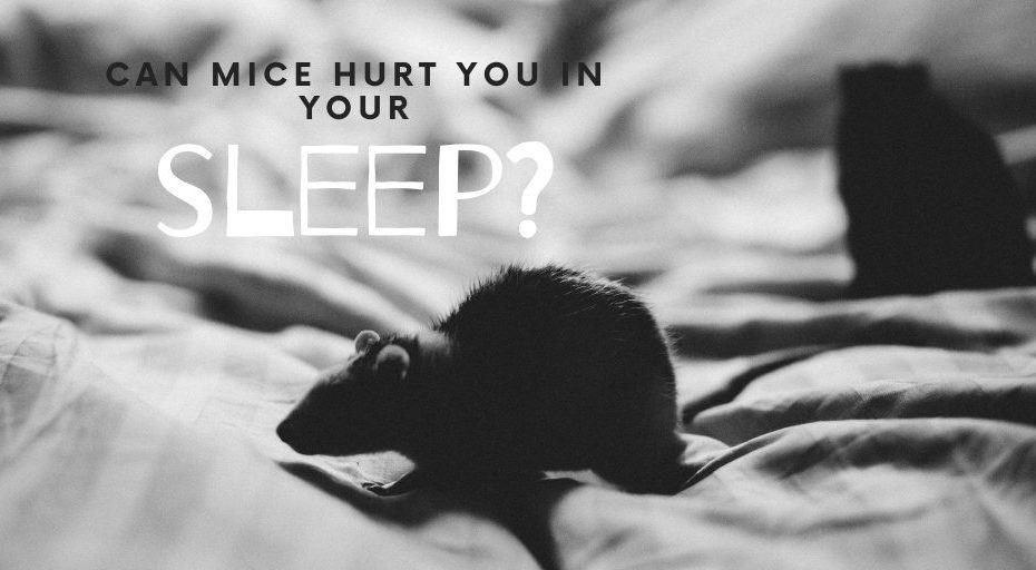 Can Mice Hurt You In Your Sleep?
