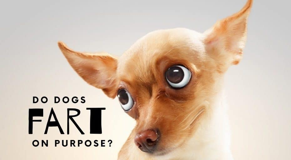 Do Dogs Fart on Purpose?